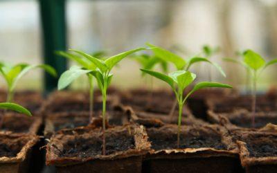Conoce Ovnigrow para el crecimiento vegetal