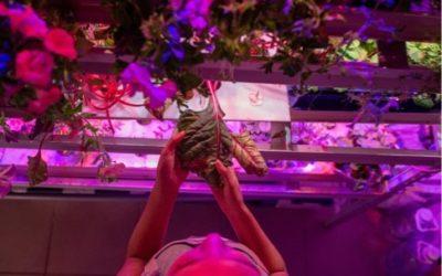 Productos de iluminación Led para el crecimiento de plantas